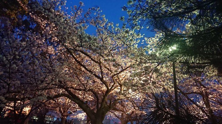 お花見 in 舞鶴公園